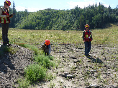 Water and Carbon Flux Research on Reclaimed Oil Sands Mines